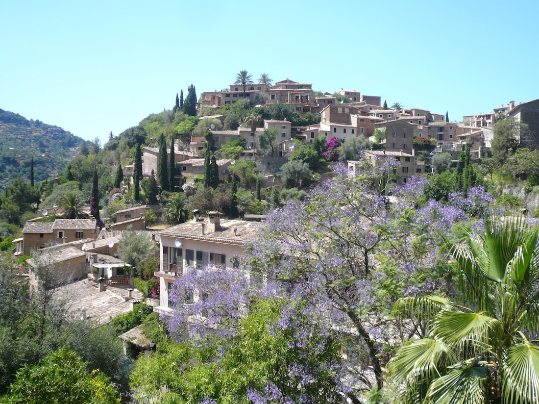 Picture shows a hill in Mallorca covered in pale sandstone buildings, trees and greenery. There is a tree sprouting purple flowers in the foreground and the sky is blue and sunny.
