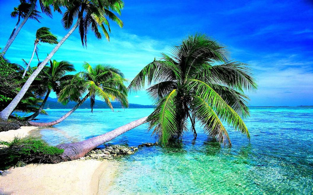 Picture shows a white-sand beach with low lying palm trees leaning over the clear turquoise sea. The sky is blue and the colours of the picture look exaggerated and overly bright.
